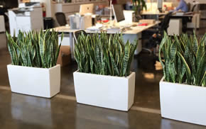 office planter. Office Planter. Real Plants Planter B